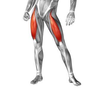 svaly stehna - drepy